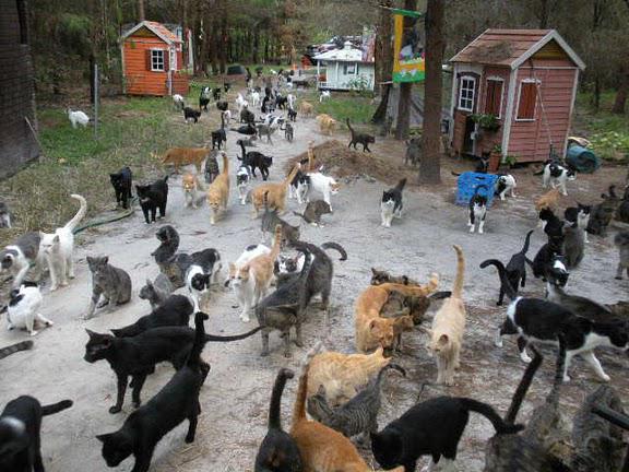 Herding Liberal Cats